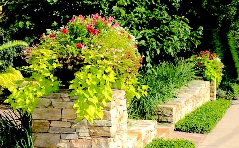 http://www.jardinage.fm/wp-content/uploads/2011/07/arbuste-conteneur.jpg