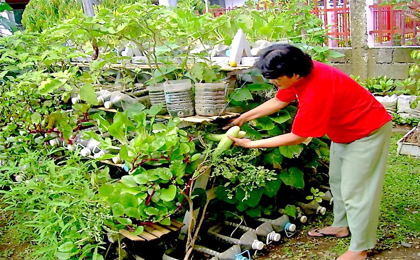 horticulture jardinage jardinage en contenant. Black Bedroom Furniture Sets. Home Design Ideas